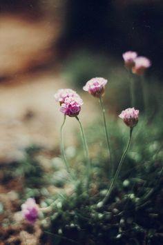 I love these wild flowers! Wild Flowers, Beautiful Flowers, Summer Flowers, Simple Flowers, All Nature, Gras, Belleza Natural, Bokeh, Beautiful World