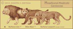barbary lion, atlas bear and barbary leopard