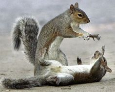 squirrel Sith by on DeviantArt Funny Squirrel Pictures, Funny Star Wars Pictures, Funny Animal Photos, Funny Images, Funny Photos, Funny Animals, Cute Animals, Funniest Animals, Funny Pix