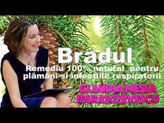 Bradul, Remediu 100% Natural Pentru Plamani si Infectiile Respiratorii - YouTube Entertainment, Film, Youtube, Plant, Movie, Films, Film Stock, Film Books, Movies