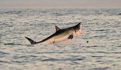 Shark bites 8-year-old boy .. http://www.emirates247.com/news/shark-bites-8-year-old-boy-2015-06-25-1.594845