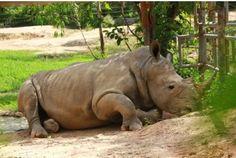 Mở cửa vườn thú tư nhân lớn nhất Việt Nam  Mường Thanh Safari Land