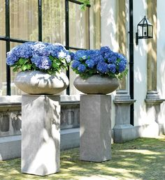 Hydrangea in Division Fiber planters from the Green Office - bringing the outside in. Hire plants for your business. Hydrangea Potted, Hydrangeas, Green Office, Indoor Outdoor, Outdoor Decor, Division, Ladder Decor, Greenery, Garden Sculpture