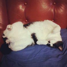 my cat Kiki