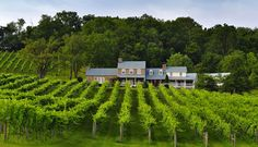 What could make for a better #WeekendGetaway than some time in Virginia's wine country? We'll let you know when to go and what to do when you get there. #Travel