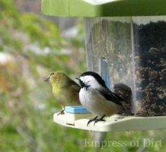 Bird Buddies On The Feeder - learn how to properly clean a bird feeder for good bird health