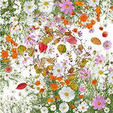 Flowers of Fukushima