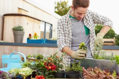 Spruce up your Yard: Gardening tips for beginners