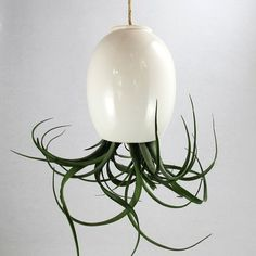 Air Plant Pod by Mudpuppy. I've wanted one of these forever after finding his Etsy shop. Finally bought one from Fab. http://fab.com/4nkka5