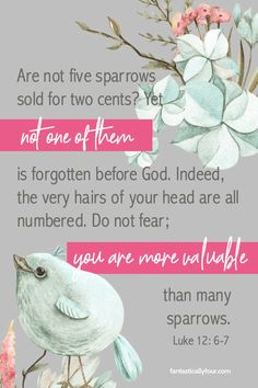 Luke 12:6-7 - All life is important to God! Even the sparrows.