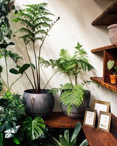 17 Best Indoor Trees (and Tropical Plants) to Grow in Your Living Room Tree Fern Big Plants, Green Plants, Tropical Plants, Indoor Plants, Indoor Ferns, Cactus Plants, Cactus Art, Indoor Gardening, Big House Plants