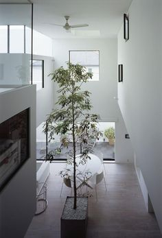 tall-tree-inside-house-highest-ceilings