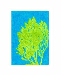 topola, 15x20cm, 2017 | balsam tree, 15x20cm, 2017 | Anna Marczak