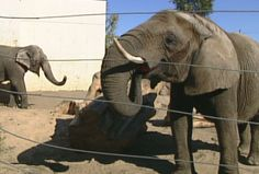 The Topeka Zoo says it will not meet with the self styled animal rights group, PETA over its alleged concern over the living conditions of  the zoo