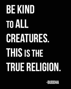 38 Awesome Buddha Quotes On Meditation Spirituality And Happiness 21 Now Quotes, Great Quotes, Quotes To Live By, Life Quotes, Inspirational Quotes, The Words, Jiddu Krishnamurti, Biblia Online, Paz Interior
