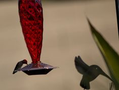 """Love this """"Love Hummingbirds?  We do too :) You'll love this Unique Crystal Spiral Glass Hummingbird Nectar, Glass Hummingbird Feeders, Humming Bird Feeders, Copper Glass, Copper Red, Cherry Valley, Hummer, Colored Glass, Lava Lamp"""