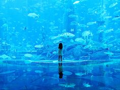 A place to wonder the beauty we live in...Dubai aquarium