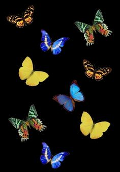 butterfly colourful design pretty picture and wallpaper