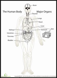 human body systems multiple choice worksheets 5. Black Bedroom Furniture Sets. Home Design Ideas