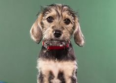 My personal favorite, Marta, won MVP in the Puppy Bowl!
