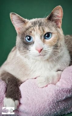 This blue-eyed beauty is Katie