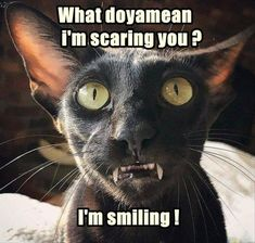Funny Animal Picture Dump Of The Day 23 Pics