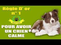 YouTube Education Canine, Cesar Millan, Flea And Tick, Basset Hound, Boxer, Border Collie, Fleas, Dog Cat, Corgi