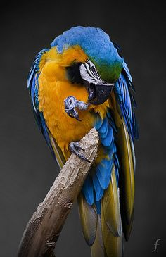 BIRDS by FRANK SMOUT IMAGES, via Flickr