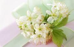 Лучше разводить цветы, чем мосты влюбленных, людей на хлопоты, а друзей на деньги…