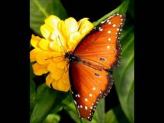Live Life Like a Butterfly. Vibrant ly Vibrant : Pulsating with life , vigor or activity. My Positive Affirmation : I Live my Li. Butterfly Kisses, Butterfly Makeup, Wayne Dyer, Beautiful Butterflies, Beautiful Flowers, Word Of God, Christian, Dragonflies, Orange Butterfly