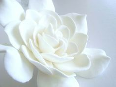 Would like one large gardenia for hair.