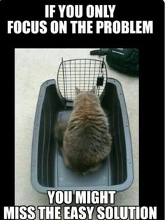 True Kitty Meme | If you only focus on the problem, you might miss the easy solution | Petsent