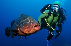 Diving and Snorkelling - Madeira All Year