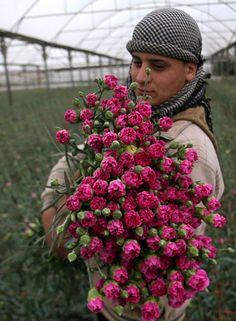 A Palestinian man prepares carnations for export at a flower farm in Rafah, Gaza Strip