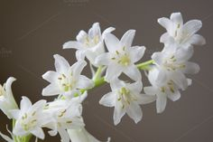 flowers by naturelover on @creativemarket