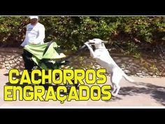 Videos Engraçados de Cachorros - Os Melhores Vídeos de Animais