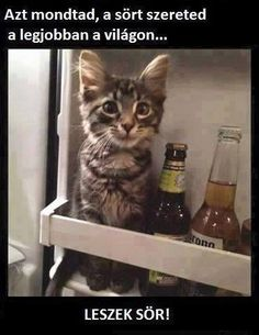 Kitten thinks he's a beer - your daily dose of funny cats - cute kittens - pet memes - pets in clothes - kitty breeds - sweet animal pictures - perfect photos for cat moms Cool Cats, I Love Cats, Crazy Cats, Cute Kittens, Cats And Kittens, Cats Meowing, Kitty Cats, Cats Bus, Ragdoll Kittens