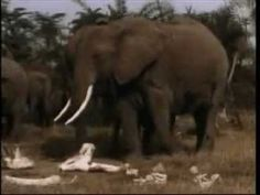 We underestimate the intelligence (and ability to feel emotions) of animals...Watch these elephants mourn over a fallen friend.  Touching.