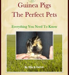 Guinea Pigs – The Perfect Pet