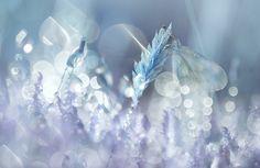"500px / Photo ""Papillon bleu"" by florence richerataux"