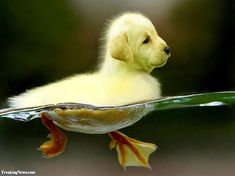 My new obsession: Dogs + Birds = Dirds