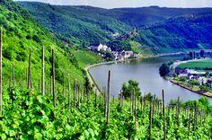 Winnica nad Mozelą z widokiem na jedną z najpiękniejszych wiosek doliny