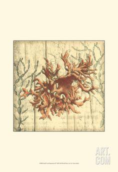 Coral Impressions II Art Print at Art.com