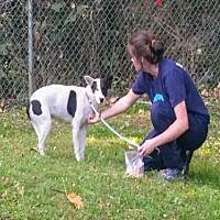 Atlanta, Georgia - Labrador Retriever. Meet PIPER, a for adoption. https://www.adoptapet.com/pet/19365004-atlanta-georgia-labrador-retriever-mix