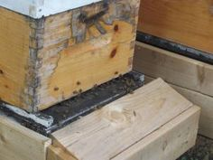Some of Bevin Bradley's bees crawling in and out of the hives in her backyard. Trelle Burdeniuk/ News Talk Radio.