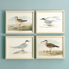 Seabirds & Shorebirds Giclee Prints | Ballard Designs