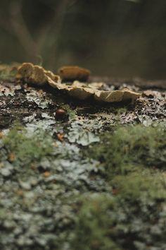 mi casita en el bosque: De Ardillas y Amanitas...