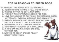 Top Ten Reasons To Breed Dogs