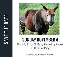 Save the Date for My First Event in Kansas City! Wildlife Photography, Animal Photography, Surviving In The Wild, First Event, Kansas City, Save The Date, Photo S, Charity, Survival