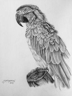 Photorealistic pencil drawing
